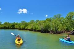 Kayaking-Mangroves-001