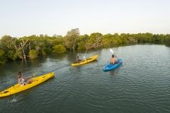 Mangrove-paddle
