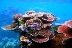 Coral_Outcrop_Flynn_Reef1 - Copy